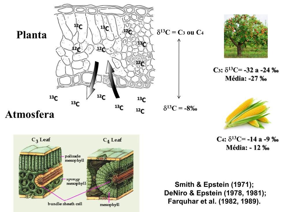 Plantas C3 e C4 Figura 3